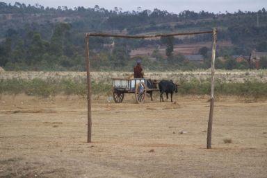De zeboe-karren zijn vaak kleurig en voorzien van grote houte wielen.