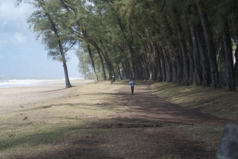 Bomen langs het strand, prachtig!