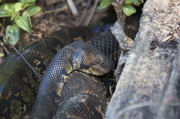 lekker slapende slang