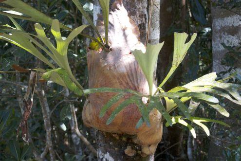 Hertshoorn