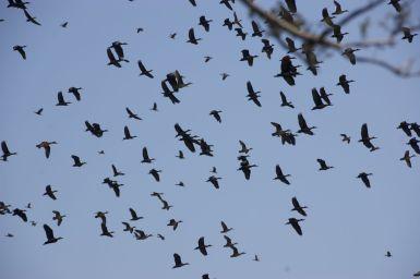 Vogels, vogels, vogels....