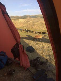 Onze kampeerburen.