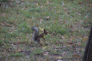 We lezen nog wat op een bankje in een parkje. Eekhoorntjes zijn druk bezig hun wintervoorraad aan te leggen.