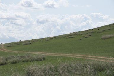 Een rij gieren huppelt achter elkaar aan de heuvel op om vanaf te kunnen opstijgen.