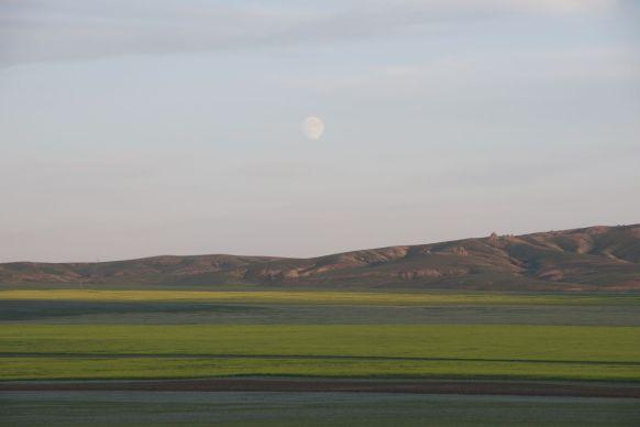 Een enorme maan boven de koolzaadvelden is ons uitzicht van de avond.