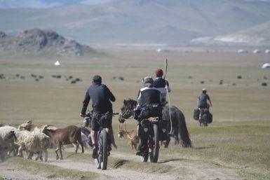 Als Nicolas later groot is wil hij denk ik herder in Mongolië worden. Zodra hij een kudde op de weg ziet begint hij extra hard te fietsen en te joelen.
