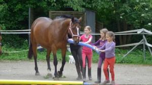 Pferd während einem Coaching