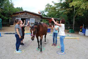 Pferdegestütztes Coaching bedeutet oft Teamarbeit