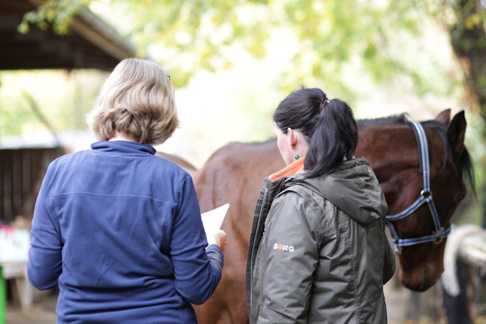 Freiburg im Breisgau - Pferdegestütztes Coaching