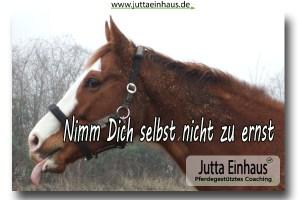 Coaching mit Pferden bei Jutta Einhaus