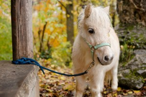 Waldkunst I Pferdegestütztes Coaching