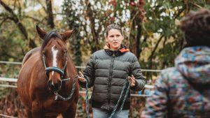 Pferdegestütztes Coaching I Seminar