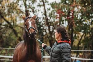 Pferdegestütztes Coaching I Bei der Arbeit