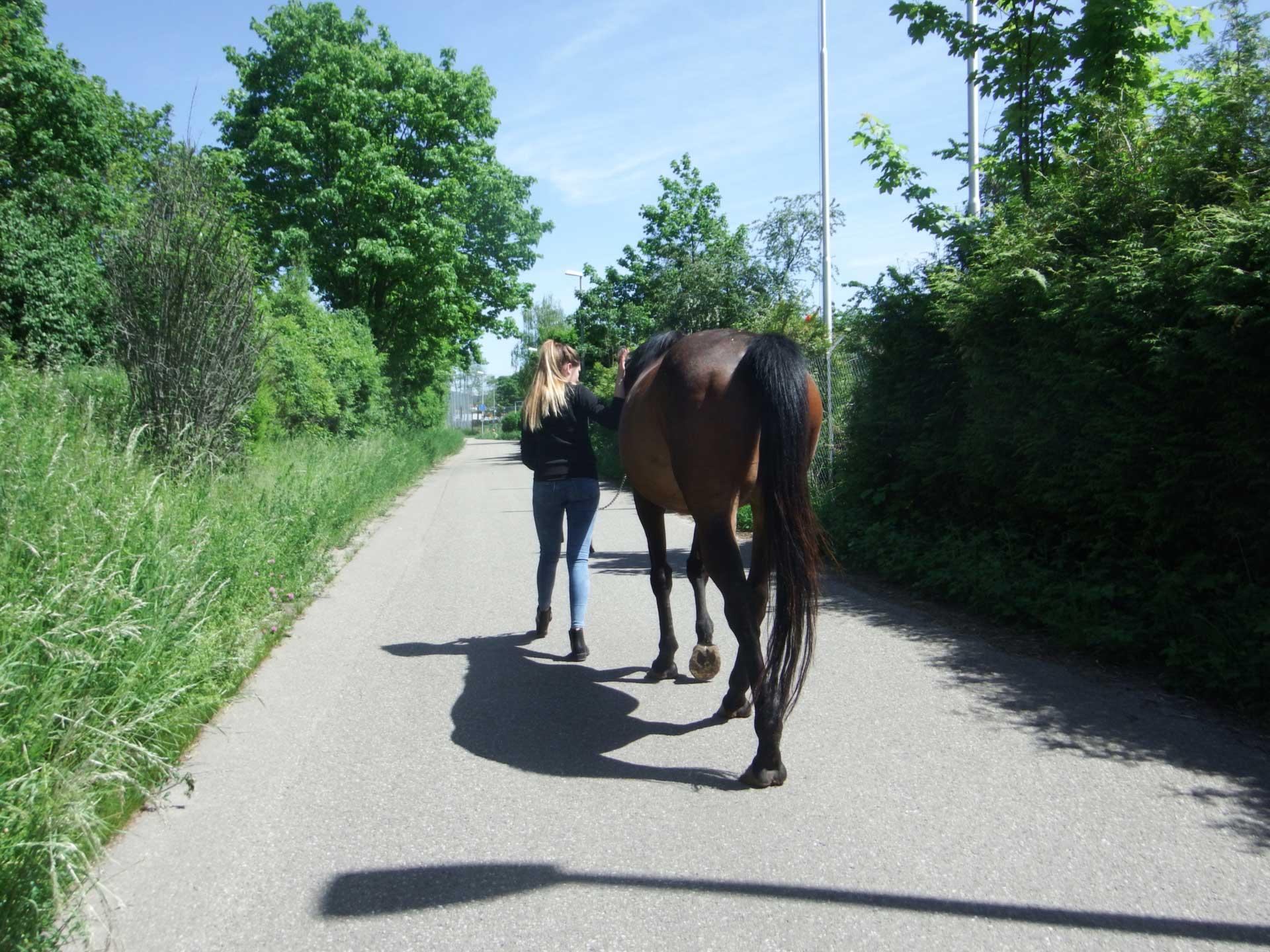 Pferdegestütztes Coaching I Freiburg im Breisgau