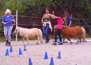 Pferdegestütztes Coaching I Ausbildung