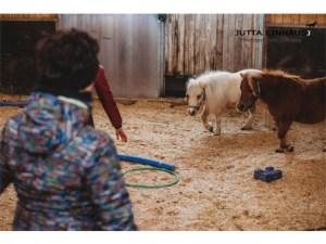 Pferdegestütztes Coaching I Workshop für Frauen