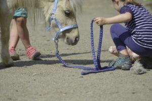 Pferdegestütztes Coaching für Kinder