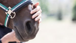 Coaching mit Pferden Deutschland
