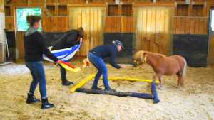 Übung beim Pferdegestütztem Coaching