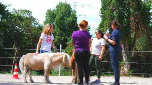 Coaching mit Pferden mit Shettys