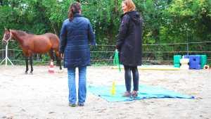 Arbeit mit Pferden in Freiburg im Breisgau