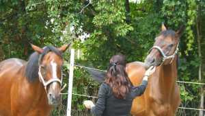 Coaching mit Pferden Freiburg