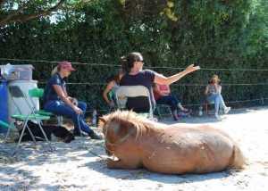 Pause beim Pferdegestützem Coching für Pony Jinx