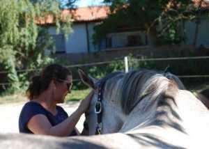 Arbeit als Pferdegestützter Coach