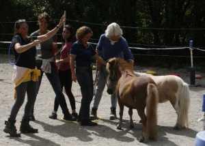 Coaching unterstützt von Pferden