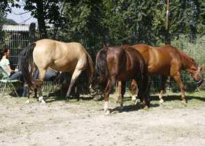 Pferde als Mitarbeiter im Pferdegestütztem Coaching Deutschland