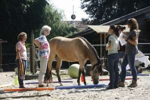 Mit Pferden arbeiten in Freiburg