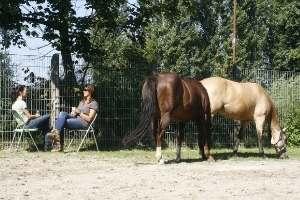 Eine Ausbildung zum Pferdegestütztem Coach in Freiburg