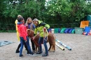 Arbeit als Pferdegestützter Coach in Freiburg