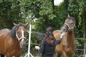 Pferdeteam