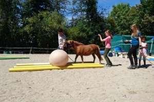 Coaching mit Pferden und Kindern