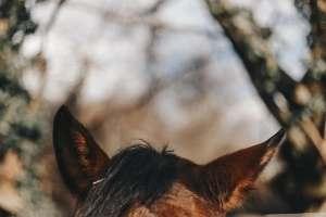 Pferde im Coaching Deutschland