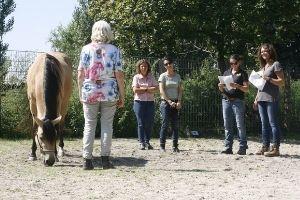 Pferdegestützte Ausbildung in Deutschland