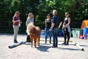 Pferdegestützt in Freiburg