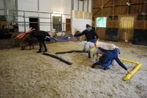 Teambuilding im Coaching mit Pferden