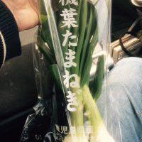 九州_有機野菜宅配_寿山_葉玉ねぎ