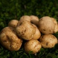 juzan_potato