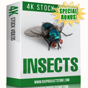 Special Bonuses - November 2017 - Insects 4K Stock Videos Pack