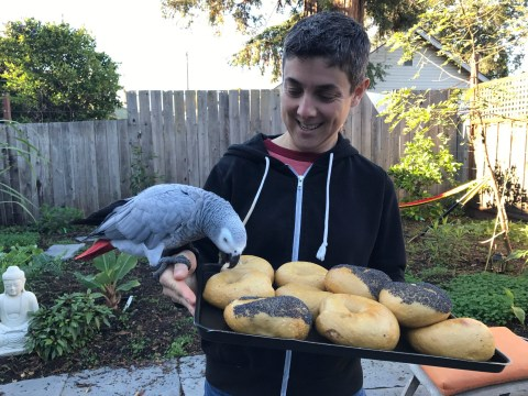 Emily Winston of Boichik Bagels with Mishi, her African grey parrot. (Photo/Alix Wall)