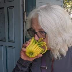 Madeline Prager getting a whiff of the wonderful smell of one of Rabbi Sara Shendelman's homegrown Buddha's hand citrons (Photo/David A.M. Wilensky)