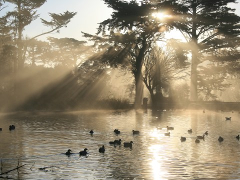 Stow Lake today in Golden Gate Park. (Wikimedia/Brocken Inaglory)