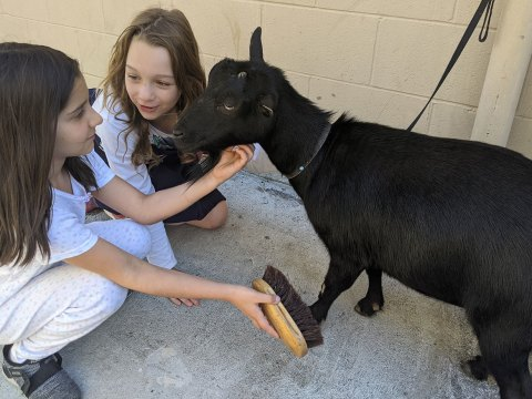 Sofia Davtyan and Kaitlyn Modal make a new friend at a petting zoo as part of a Bay Area Chabad day camp, June 22, 2021.
