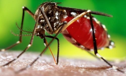 dengue treatment tips in hindi