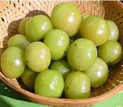 amla-benefits-in-hindi