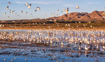 Scenes of the morning flights at Bosque del Apache.