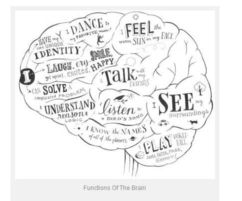 The human brain and nervous system for KS1 and KS2